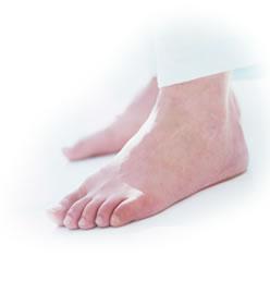 こうがい たい の 足